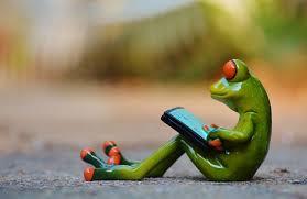 frog workig